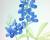Simple Bluebonnet, Set of 4 Blank Note Cards, 4.25x5.5 inches