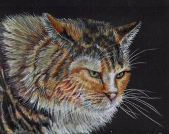 Colored Pencil Angry Calico Cat Drawing