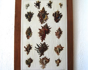 Reclaimed Wood Cabinet Print, Shells
