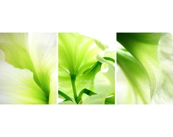 Green Amaryllis Flowers Photo Set of Three 11x14 prints bright lime green decor triptych abstract floral photography trio chartreuse white