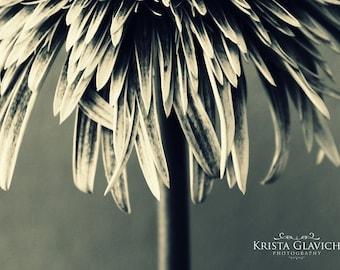 Gerbera Daisy Photograph, Garden Home Decor, Black And White Photography, Flower Art, Floral Wall Decor