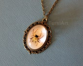 Real Spiny Orb Weaver Spider in resin pendant chain necklace choice of brass silver copper & clasp Taxidermy Insect preserved arachnid bug