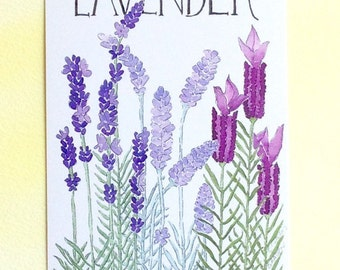 Three Lavender Postcards, lavender quotation on back, 4 in x 6 in, silky smooth, gardener birthday gift
