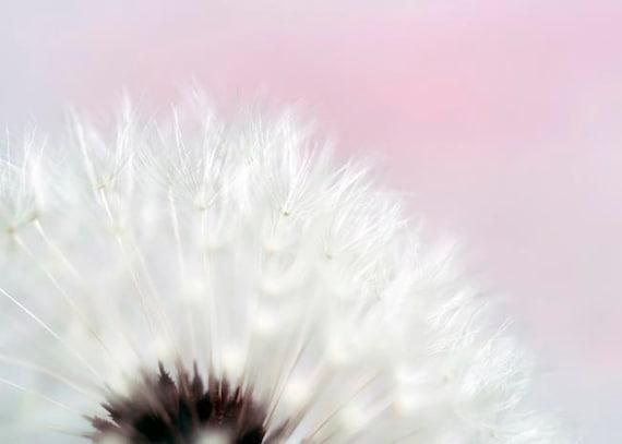 Pink Flower Photos, Dandelion Print, Girl Nursery Decor, White, Dandelion Art Print