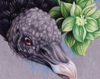 """Black Vulture and Floral Illustration 5""""x7"""" Mini Giclee Print - """"Black Vulture and Hellebore"""""""""""