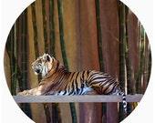Kids Wall Decor, Modern Home Decor, Decal, Sumatran Tiger Conservation, Bamboo Green, Jungle, Orange, Black, Stripe - The Great Beauty