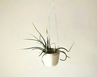 HANGING AIR PLANTER - Mini Handmade Ceramic Planter by Janelle Beaulieu