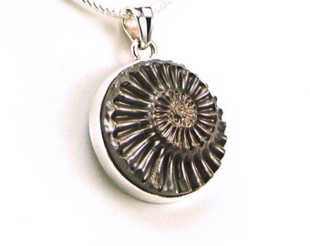 Pyritized Jurassic Ammonite Sterling Silver Pendant - N816