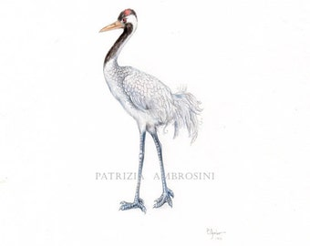 Original 7x10 Watercolour Common crane ......NOT A PRINT ..Original Painting,bird,animal,fine art,