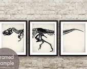 Tyrannosaurus Bone Skelton - Set of 3 - Art Prints (Featured in White Stone with Black) Science Art Print Posters