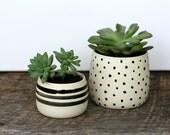 Succulent Planter Set- Black & White Dot/Stripe