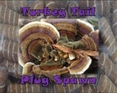 Turkey Tail Mushroom Plug Spawn 50 Count Log Cultivation