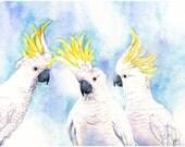 Cockatoos print of watercolour painting 'The Hoons' C3615 - A3 size print wall art print - bird art print