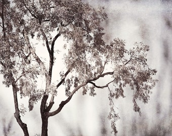 "Black and White Tree Photography - nature grey photo light gray picture branches wall art branch artwork modern fine art decor, ""Poetic"""