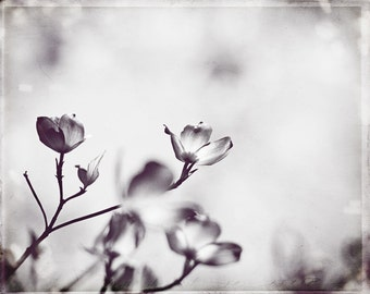 """Black and White Dogwood Photography, light grey floral art print pale gray nature photo spring branches branch decor, """"Peaceful Reflection"""""""