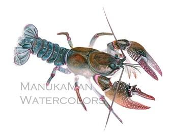 Crayfish study 1watercolor print by Damon Crook