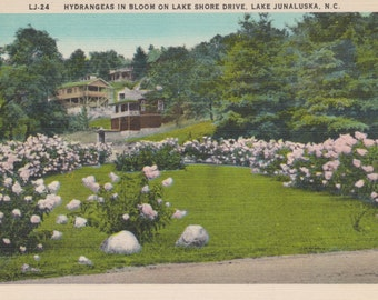 Lake Junaluska, North Carolina, Hydrangeas, Lake Shore Drive - Linen Postcard - Unused (F1)