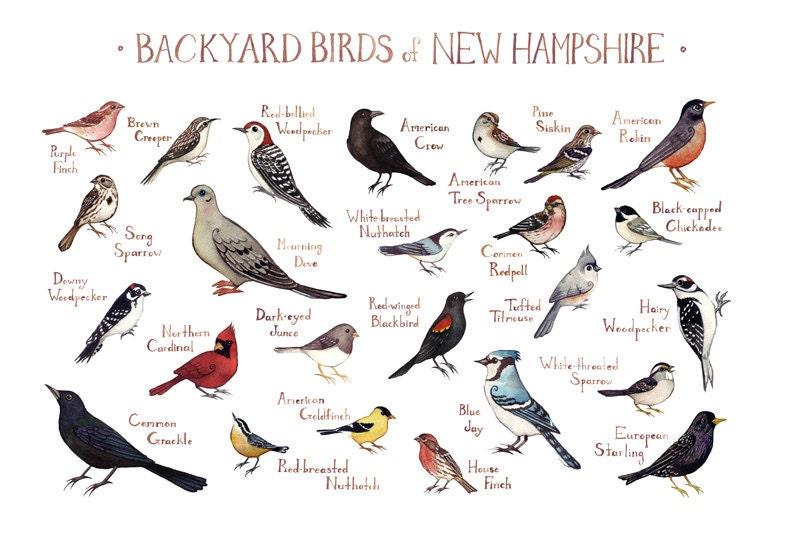 New Hampshire Backyard Birds Field Guide Art Print