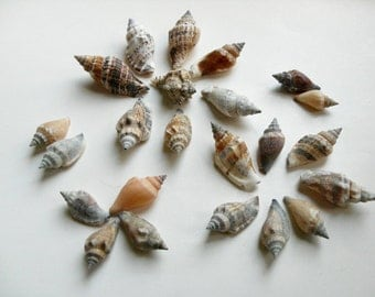 Whelk Shells - Natural seashells, shells for crafts, shells for jewelry, beach wedding decor, natural decor, nautical decor, beach party