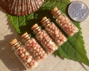 Authentic Kahelelani Shells - Shells - Hawaiian Craft Suppies-Eco Friendly Picked- Great For Weddings, Parties, or Decorations.