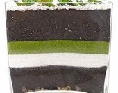 SUCCULENT SLICE VASE terrarium - succulent terrarium, feng shui terrarium, terrarium, succulent, living terrarium