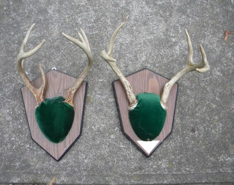 2 vintage whitetail wall mount plaque DEER ANTLERS horns CRAFTS lot  taxidermy   ab1