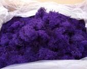 Reindeer Lichen-Purple
