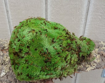 Large Royal Pool Moss
