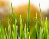 Fire Grass-- Photo Print