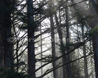 Quiet Winter Mist Sunlight Forest Trees, Pacific Northwest, Morning Light, Fine Art Photography, signed matted 8x12 Original Photograph