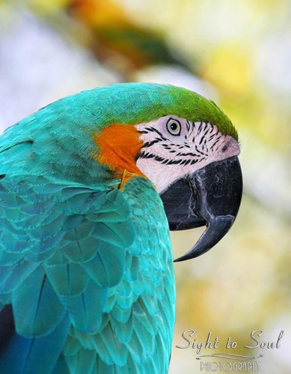 Parrot Art, bird photography, blue and gold macaw photo, tropical wall art, fine art print