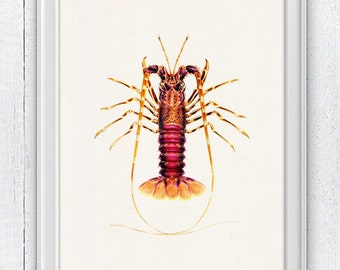 Lobster sea life print-Wall decor poster  ,  Sale buy 4 get 5- Marine  sea life illustration A4 print SPA021