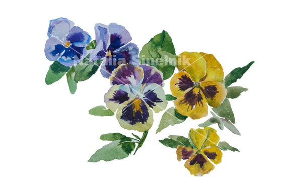 Mix of different colors pansy flowers digital download original watercolor yellow, purple and blue clipart, cottage chic style painting