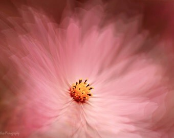Pink flower photograph, cosmos fine art photo, flower print,  wall art decor, floral print, ethereal wall decor print, romantic art
