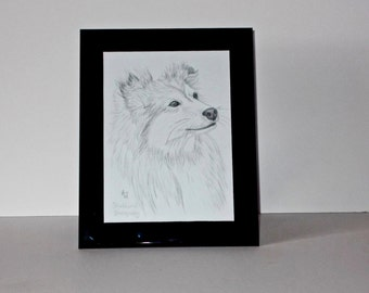 Shetland Sheepdog (Shelti) dog framed pencil drawing Original