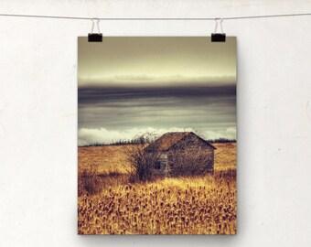 Chasing Cattails, Photographic Print, Rural Canada, Wheat Field, Autumn