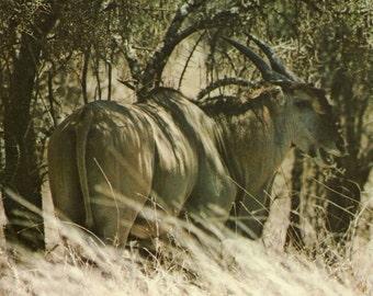 Vintage eland poster