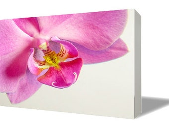 Phalaenopsis 1  Canvas Print
