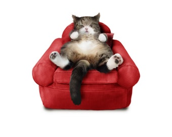 Pet Bed, Cat Bed, Dog Bed, armchair | Different colors to choose