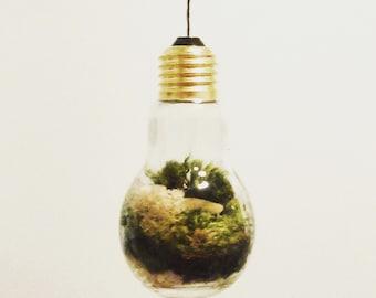 Glass Bulb Moss Terrarium - PICK UP ONLY