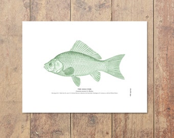 Goldfish Art in Green - Fishing Print Nautical Decor Beach Home Decor Goldfish Print Beach Decor Gifts For Dad Ocean Home Decor Boys Room