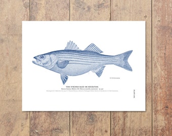 Striped Bass Striper Art in Blue-Fishing Art Bass Print Beach Decor Nautical Decor Ocean Wall Decor Gifts For Dad Fishing Print Ocean Theme