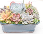 """Mother's Day Succulent arrangement in 10"""" bonsai container/bowl-Large"""