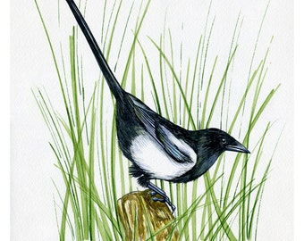 NEW PRINT, Magpie, Bird, Print of Original Watercolor Painting, Photo print