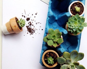 Assorted Succulent Cacti Cuttings for Mini Pots Ideal for Wedding Favors