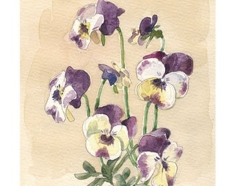 Pansy violet flowers Watercolor & pencil drawing - PRINT of pansies watercolour - Botanical floral art by Catalina.