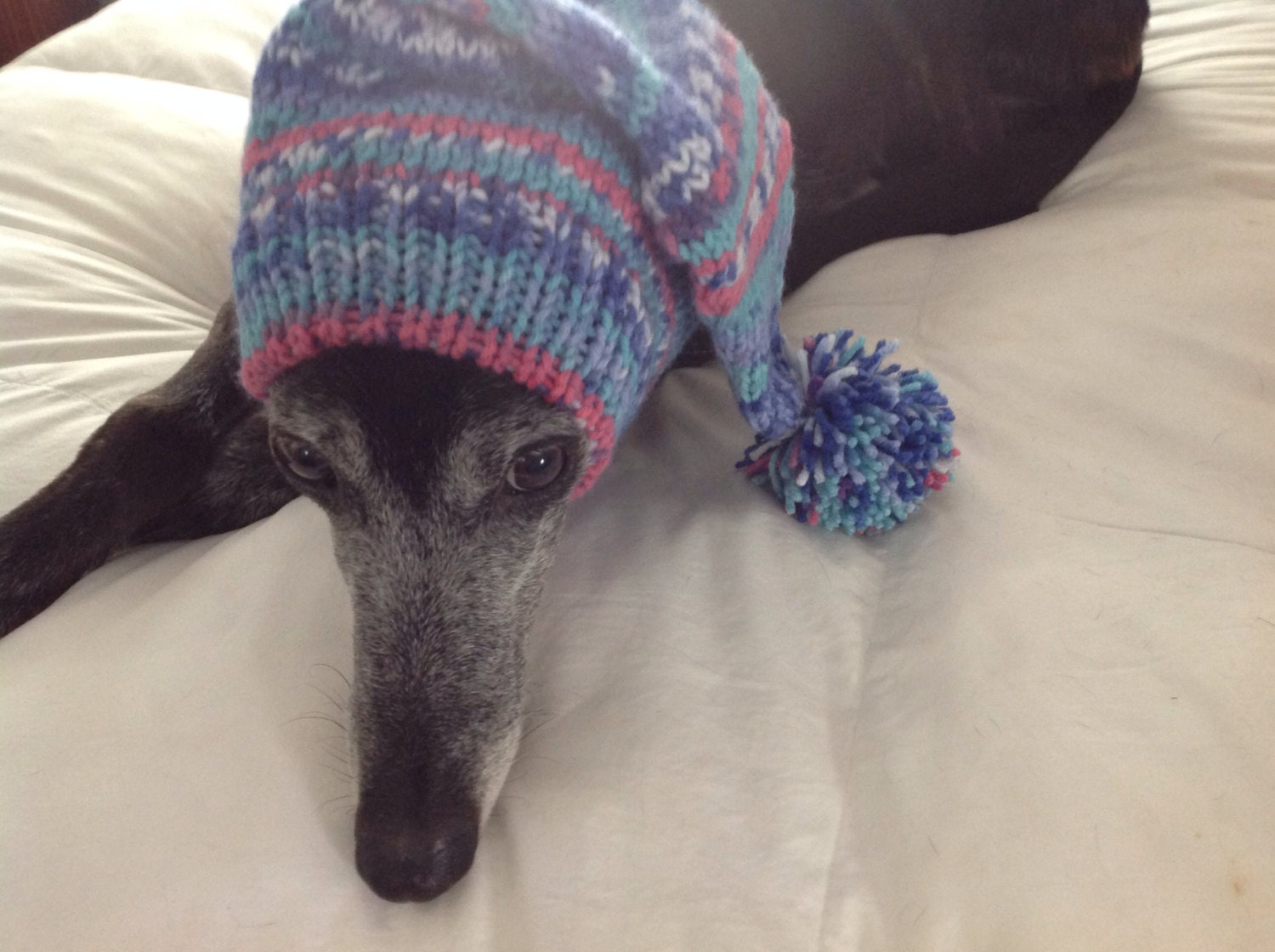 Pointy hat with snood for greyhound in fair isle pattern amber glow gallery photo gallery photo gallery photo gallery photo gallery photo bankloansurffo Images