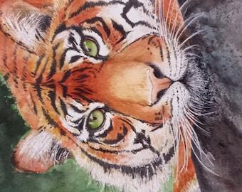 """Tiger watercolor 11 X 15"""" print"""
