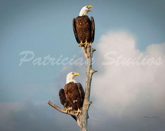 Eagle Pair: The Guardians