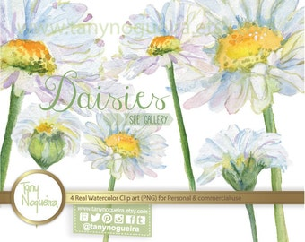 Daisies Daysies clip art images watercolor hand painted PNG transparent background Instant Download for blog cards invitations